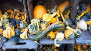 Fall-gourdsandsquash-nearGateways