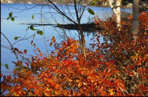Fall2013-SquamLakeLeaves-ManorFacebookPage