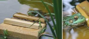 CaptainJefferds-MysteryPhoto-frog-blog-bottom