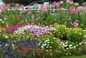 Gorgeous gardens at Captain Jefferds Inn