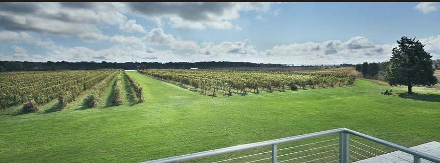 Vineyard view at Saltwater Farm Winery