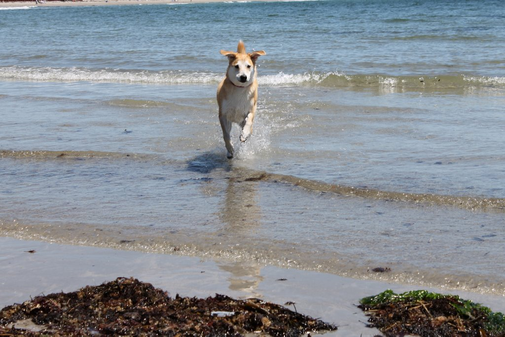 Pet friendly Captain Jefferds Inn means you can take your dog to the beach