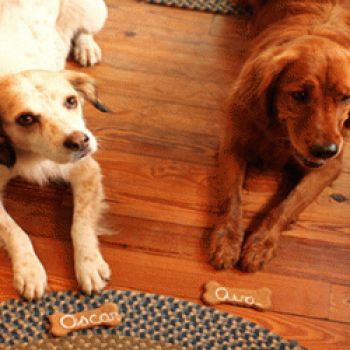 Dog travelers at Captain Jefferds Inn