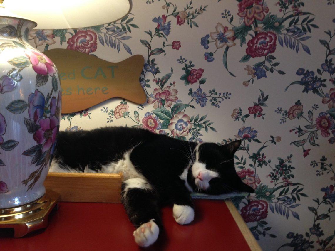 Yoda, the Chesterfield Inn cat.