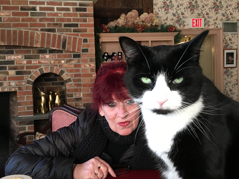 Yoda the cat with a guest at Chesterfield Inn