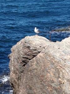 Seagulls rest near the Cliffside Inn.