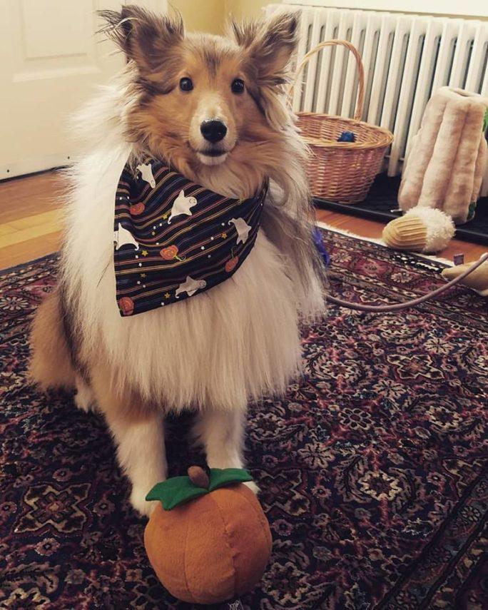 Gracie the inn dog at Cliffside Inn