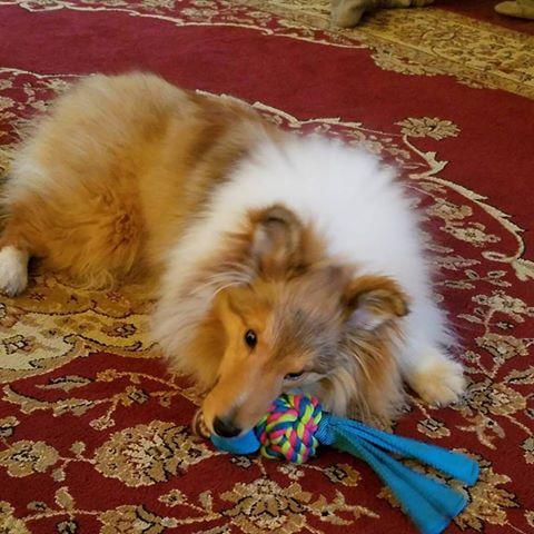 Gracie, Cliffside Inn puppy.
