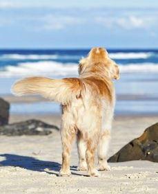 Dog-onthebeach