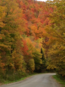 Fall scene near Rabbit Hill Inn