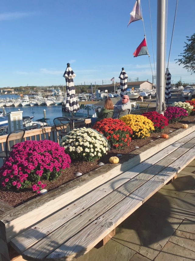 View of fall mums and Harbor Hill Marina in the background.