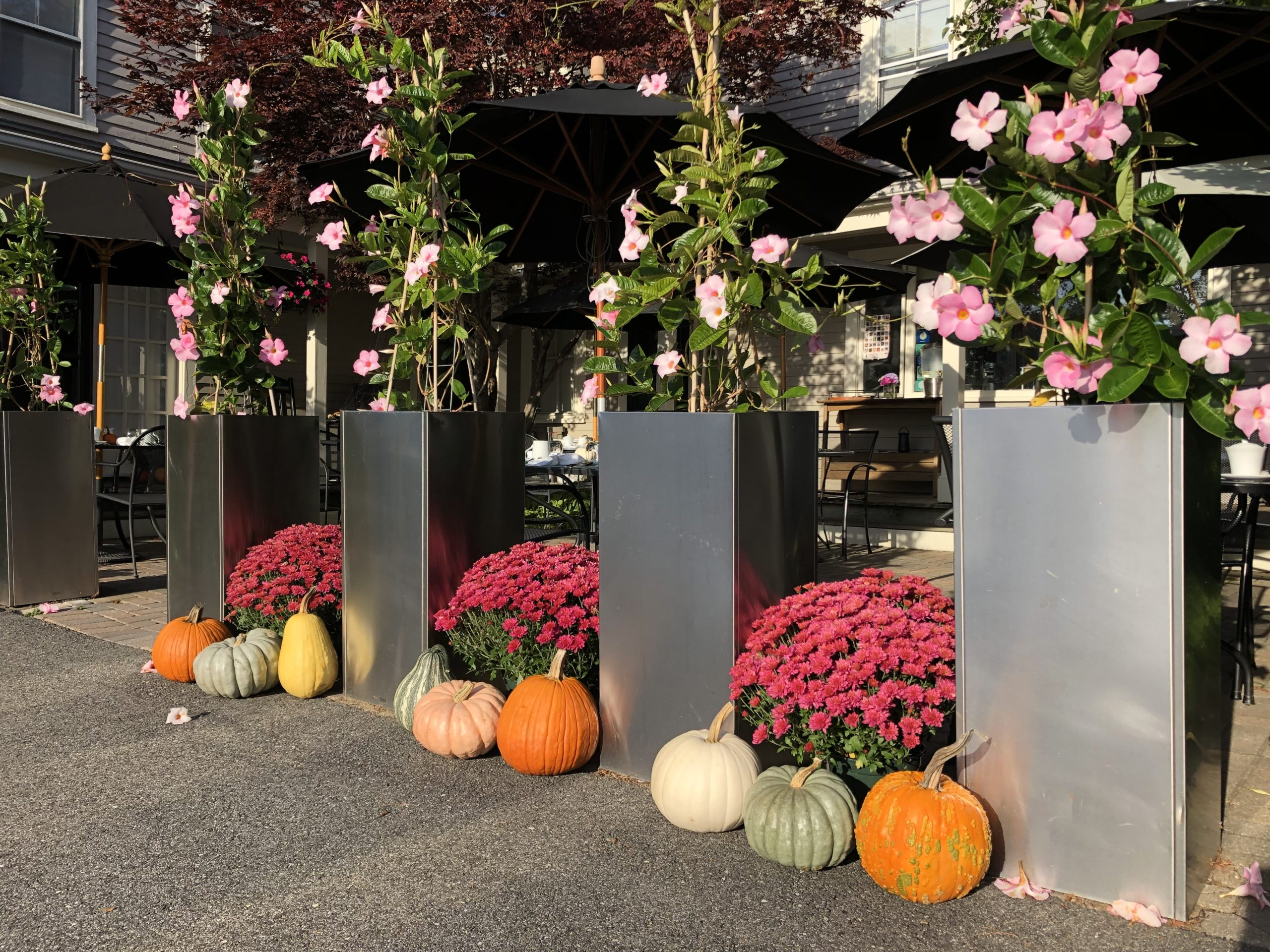 Pumpkins and mums in front of Inn at English Meadows.