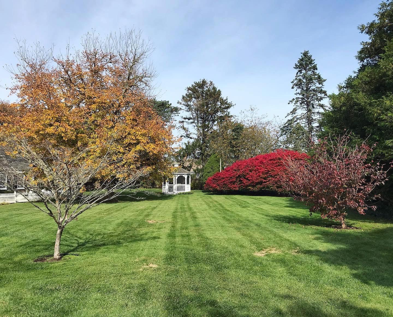 Red bush at Captain's House Inn