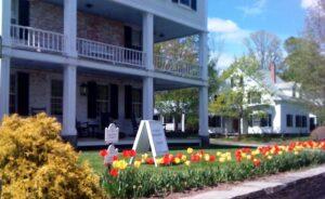 Grafton Inn - spring tulips
