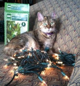 Rabbit Hill Inn's cat playing with holiday lights