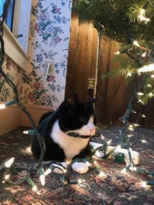 Yoda the Chesterfield Inn's cat