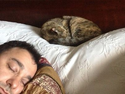 Sleeping cat with guest at Rabbit Hill Inn