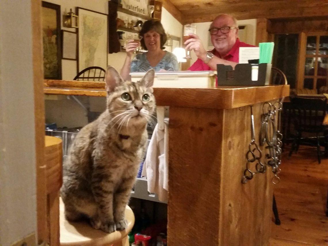 Reese, the inn cat at Rabbit Hill Inn