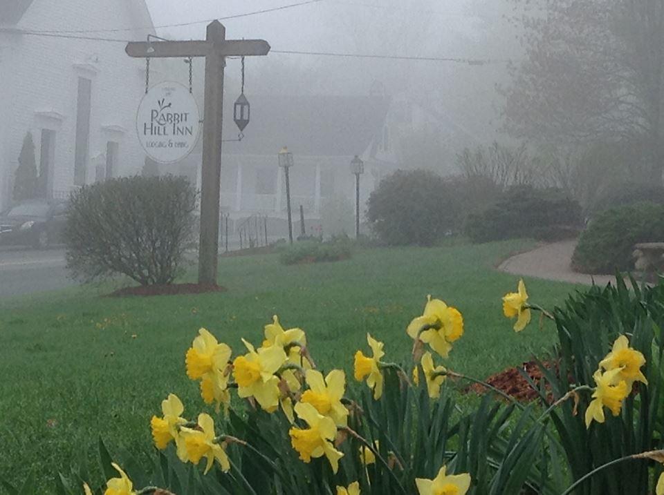 Fog and daffodils at Rabbit Hill Inn