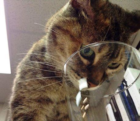 Reece, the Rabbit Hill Inn's cat