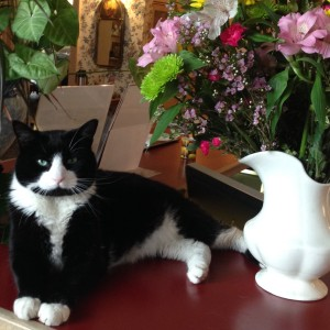 Yoda, the Chesterfield Inn cat, poses for a spring photo