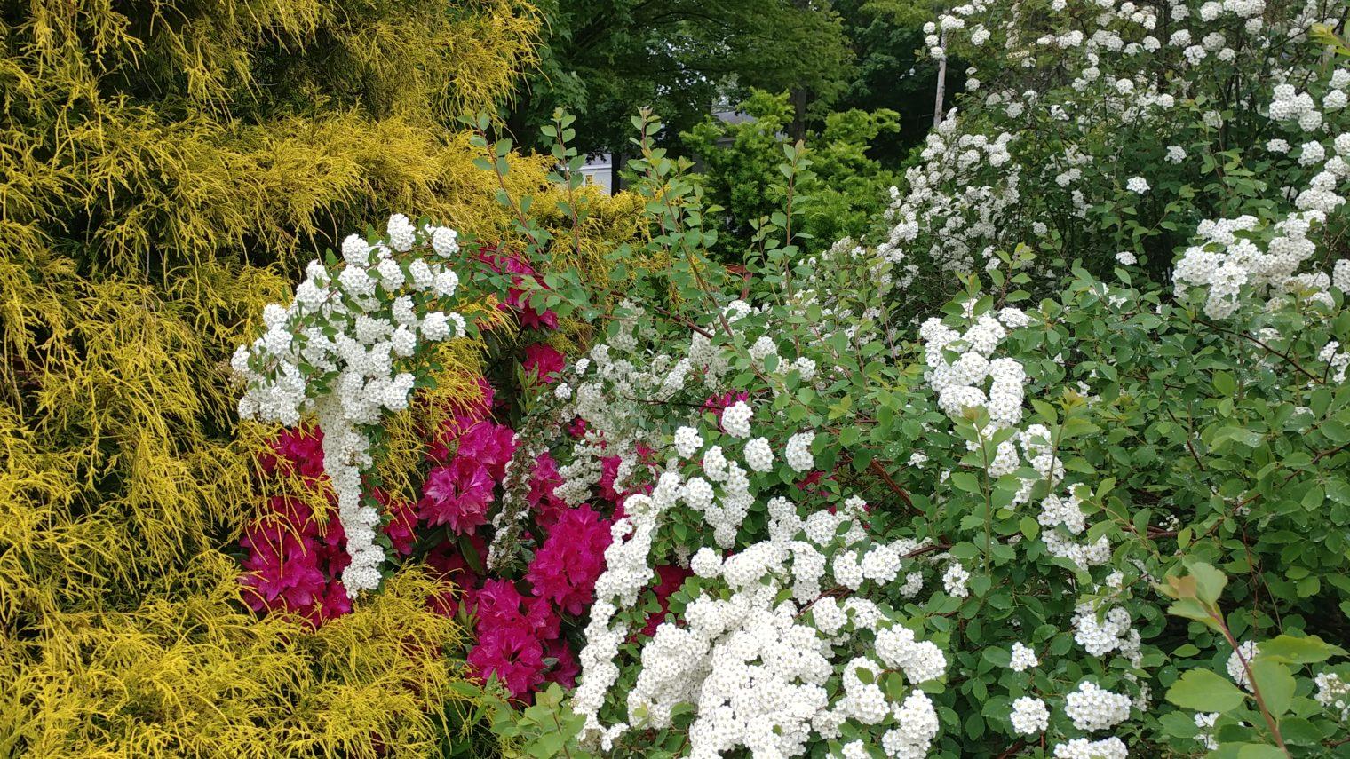 Blooming gardens at Captain Jefferds Inn.