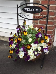 Pansies welcome guests to the Camden Maine Stay Inn.