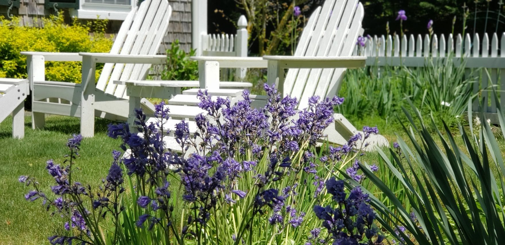 Purple flowers and Adirondack Chairs at Captain's House Inn