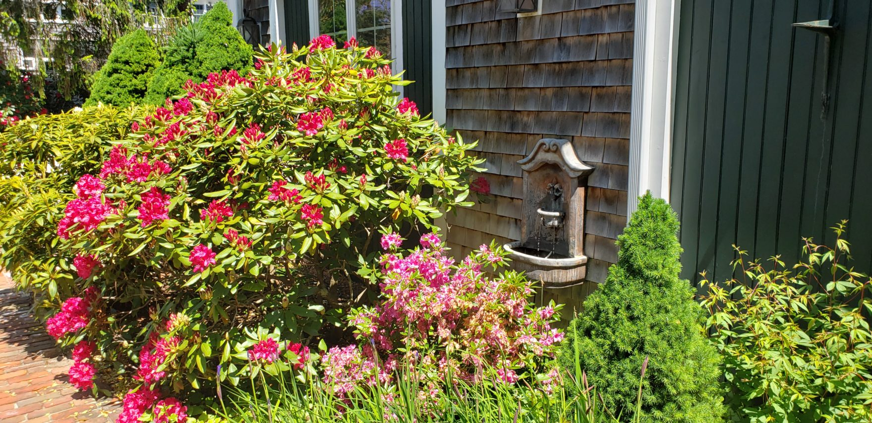 Azalea bushes in bloom at Captain's House Inn, Cape Cod