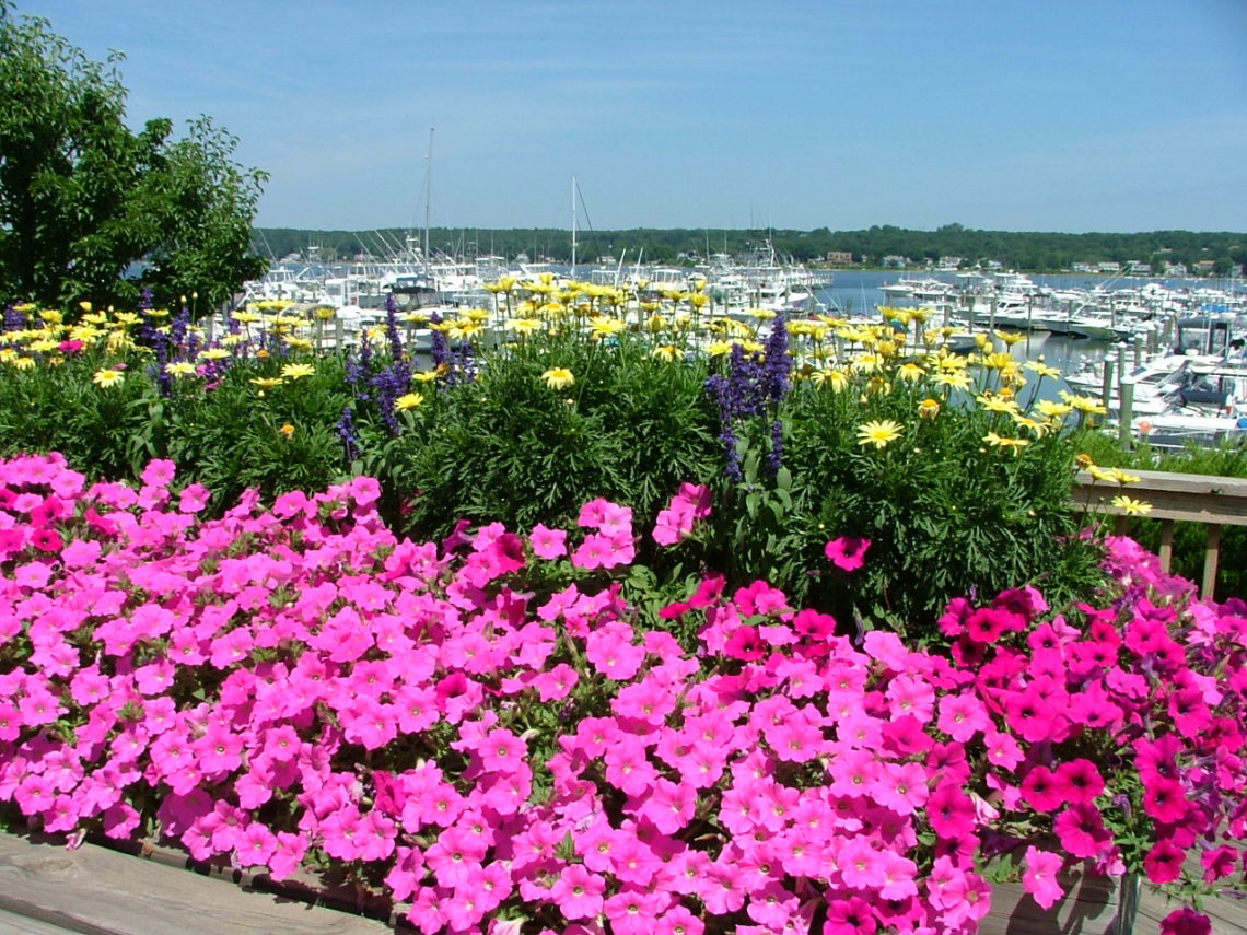 Container gardens filled with pink flowers at Inn at Harbor Hill Marina.