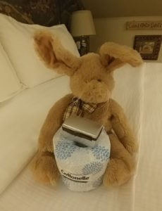 Rabbit holds toilet paper
