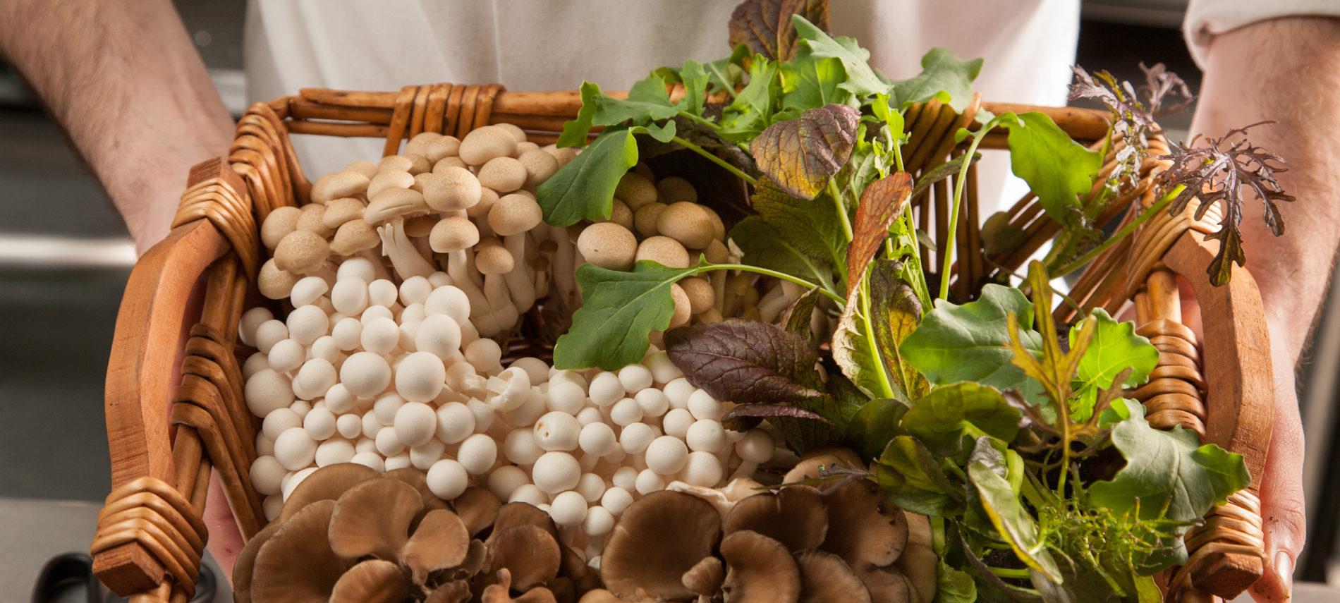 Mushrooms in basket - food