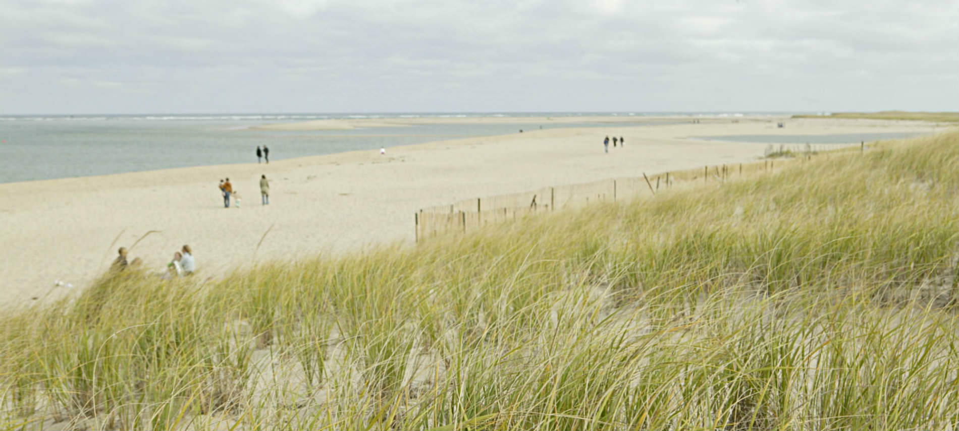 People walk down a sandy beach fronted by tall sea grass on a cloudy day.